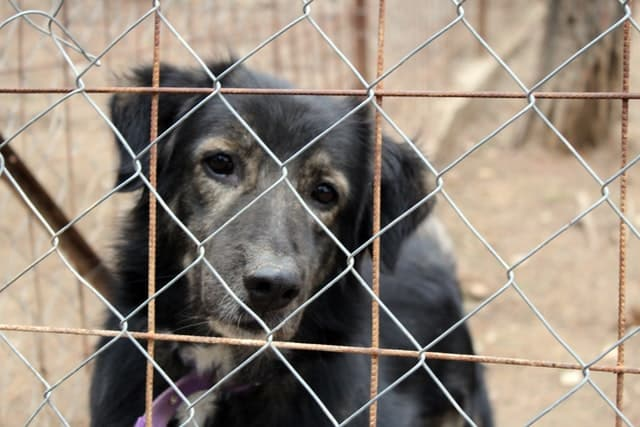 asking a guy to explore a dog shelter with you is a great way to end up with a date